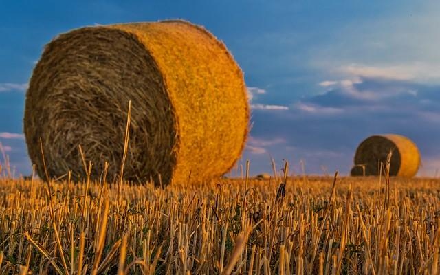 Оплачиваемые стажировки с дальнейшим трудоустройством в сельском хозяйстве для выпускников вузов и колледжей