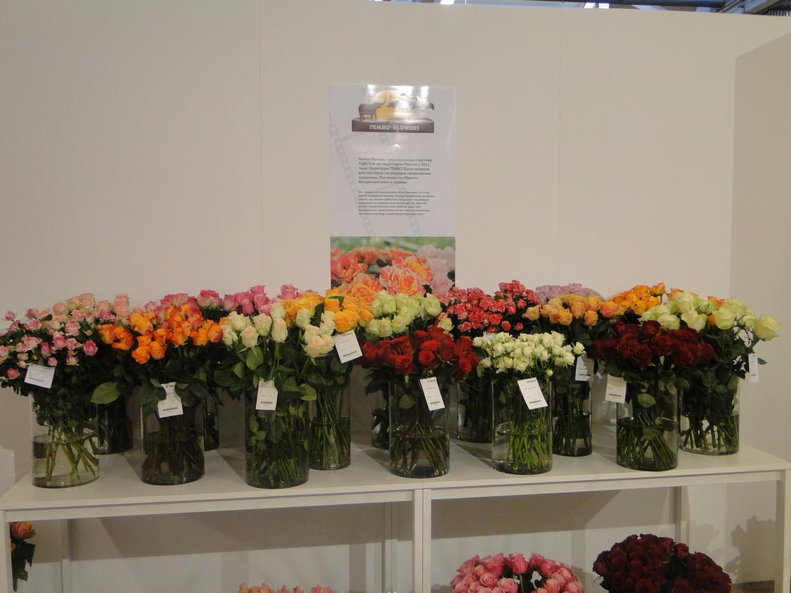 Сайт компании 7 цветов в москве страховая компания макс череповец официальный сайт